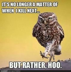13 Best Owl Puns Images Funny Animals Owls Humorous Animals