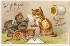 Papergreat: J&P Coats Victorian trade card: Cats handling the U.S. ...