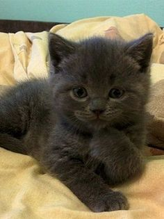 Adorable and Cute Fluffy Little Kitten - So Adorable!
