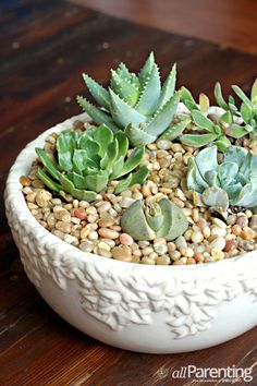 DIY succulent garden. use broken terracotta pots underneath the soil so the succulents don't get overwhelmed with water.  A common mistake upon succulent parents