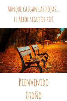 os deseamos un gran otoo amigs wwwenriquepellejeromodacom