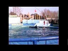 Ulises & Nereida [Aquarama Barcelona - Enero 1993] - YouTube  Ulises before his move to SWSD, one of the oldest males on record