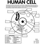 FREE SCIENCE COLORING PAGES~ Check out this one for a human cell, as well as a heart and skeleton page.  Interesting site with lots of just-for-fun things to do, too!