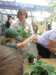 Children at The Gower School have been growing their own flowers, fruit and veg since the start of the summer term. Today all the children that participated brought in their plant pots to share with their friends. What an amazing turnout, well done everyone!!