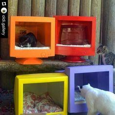 "avonladybird: "" PC/TV monitor cat homes! That's original. ➕♻️=  #reduce #reuse #recycle #reclaim #repurpose #redo #cat #home #pet #pc #tv #monitor #smalldog #dog #chat #gato #katze #hund #everythingoldisnewagain "" I want to be mouse-free."