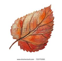 Autumn leaf painted with watercolor isolated on white background