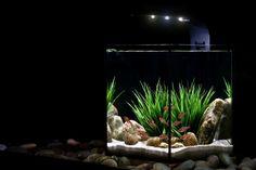 nano aquarium avec des luminaires LED