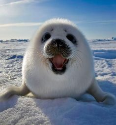 i love seals!! so cute! This reminds me of my son and daughters old tupperware seal.
