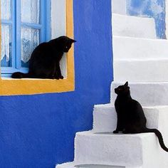 .black cats♡Contrasts.