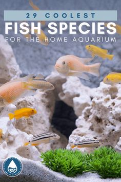 Freshwater Aquarium Fish, Aquarium Fish Tank, Nano Tank, Home Aquarium, Cool Fish, Rare Species, Fish Swimming, Fish Tanks, Betta Fish