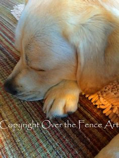 YELLOW LABRADOR  PUPPY Naps in Sunny Room by overthefenceart