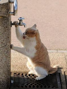 What cats have to do to get a drink of water around here...geeez!