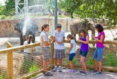 Unique experiences -- offered every day at the Elephant Interaction Area at Busch Gardens Tampa