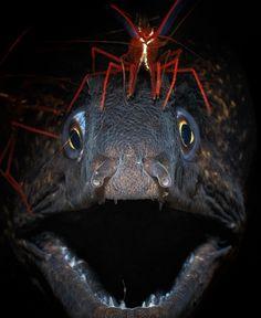 Eel and Shrip... sweet!