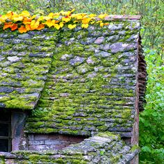 Old roof in automn