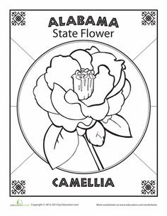 State Flower Coloring Pages Illinois Page