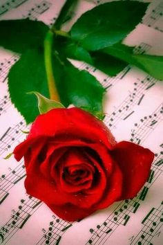 Red Rose On Sheet Music Art Print by Garry Gay. Beautiful Rose Flowers, Beautiful Flowers, Red Rose Flower, Music Ornaments, Rose Flower Wallpaper, Single Red Rose, Sheet Music Art, Rose Images, Music Wallpaper