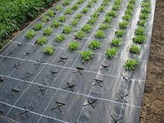 7 Top Ideas For Your Vertical Vegetable Garden Veg Garden, Vegetable Garden Design, Garden Trellis, Edible Garden, Garden Planters, Garden Paths, Garden Signs, Colorful Garden, Garden Planning