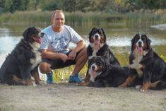 Home Dogs, Animals, Bernese Mountain Dogs, Doggies, Animais, Animales, Animaux, Animal, Pet Dogs