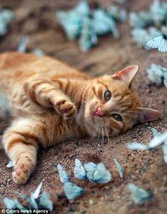 kitten playing with butterflies
