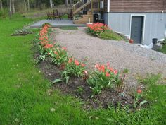 Tulppaanitkin kärsii kylmyydestä Plants, Plant, Planets