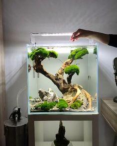 Fish Tank Terrarium, Terrariums, Aquarium Terrarium, Aquarium Stand, Aquarium Fish Tank, Planted Aquarium, Fish Tank Decor, Fish Tank Themes, Cool Fish Tanks