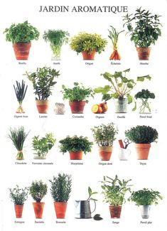 Herbal Garden (Nouvelles Images)   Flickr - Photo Sharing!