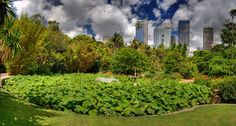 This panorama is of a pond in the Royal Botanical Gardens in Sydney.