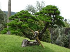 pine tree | Changho Kim | Flickr Pine Garden, Topiary Garden, Bonsai Garden, Garden Trees, Trees To Plant, Japanese Plants, Japanese Tree, Japanese Landscape, Bonsai Art