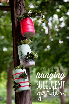Hanging Succulent Garden with International Delight - 21 Creative DIY Upcycle Projects
