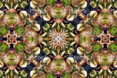 Spiritual Practices, Modern Contemporary, Roots, Succulents, Wellness, Twitter, Image, Art, Mandalas