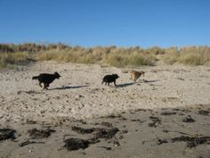 Top Dog Friendly Beaches in the UK - Kate & Tom's British Holidays, Holiday Essentials, Great British, Four Legged, Dog Friends, About Uk, Beaches, Toms, Sands