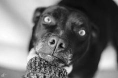Luca White Iris, Monochrome, Labrador Retriever, Black And White, Dogs, Life, Animals, Black White, Animales
