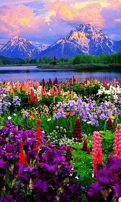Grand Teton national park USA