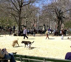 A rather large example of a good urban dog park in NYC