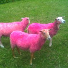 De er gået i pink på Gammel Holtegård