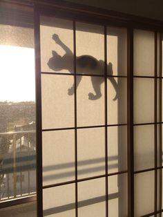 【衝撃】西日がすごかったので障子を閉めたらとんでもないシルエットが映り込んだwwwww|オタクニュース