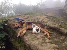 Dis is my pillow - Imgur