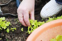 Clematis, Ale, Gardening, Horticulture, Plant, Garten, Ales, Lawn And Garden, Garden