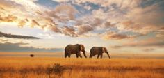Welcome to Kenya, The homeland of safari adventure that has continued to thrill from time immemorial. Elephants Never Forget, Save The Elephants, Elephant Walk, Elephant Love, African Elephant, African Safari, Gorilla Trekking, Destinations, Elephant Sanctuary