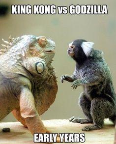 King Kong vs. Godzilla - http://funny-pictures-blog.com/2014/01/28/funny-humor-king-kong-vs-godzilla-lol/
