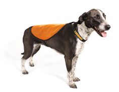 Keep your canine friend warm with accessories from Alaska-based Dog Booties.
