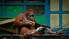 animals pbs wild animals spy in the wild spyinthewild spyinthewildpbs #spyinthewild #spyinthewildpbs