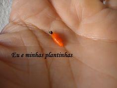 Fruto com sementes de cacto