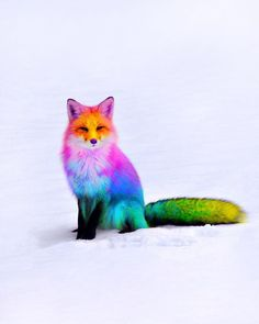 Ramzy Masri is a talented Brooklyn-based graphic designer who uses rainbow colors as a major inspiration for his artwork. Masri made a name for himself on… Cute Little Animals, Cute Funny Animals, Cute Puppies, Cute Dogs, Colorful Animals, Tier Fotos, Animal Wallpaper, Cute Animal Pictures, Animal Drawings