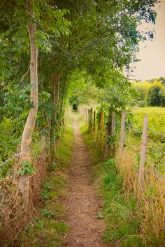 Country path [photographer and location unknown. Reverse image search finds only pins linking to a defunct blog. Some pins reference England]