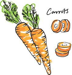Use simple line and colour to produce vector illustrations on the theme of fruit & veg.