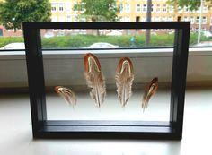 Beautiful pheasant feather floating in a black frame --------- Prachtige fazantenveren zwevend in een zwarte lijst [by Mila's frames]