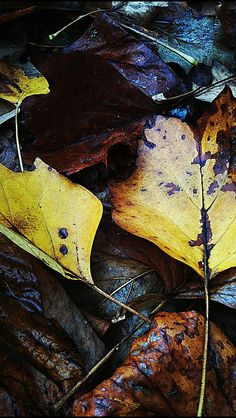 Wet fallen leaves