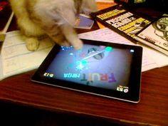 Gato que gosta de jogar no iPad   Veja mais em: http://www.jacaesta.com/gato-que-gosta-de-jogar-no-ipad/